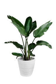 plant png indoor