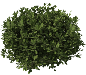 plants png hd