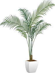 plants png indor