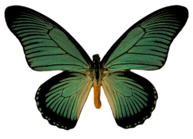png butterfly clipart