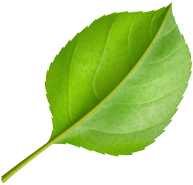 png green Leafs clipart
