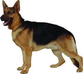 police black dog png