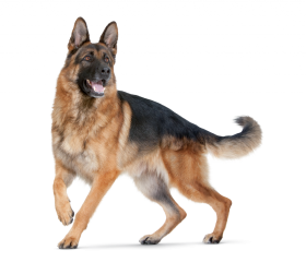 police dog png
