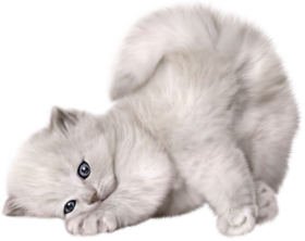sleep gray cat png