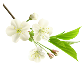 Spring Flower PNG Photos