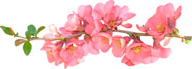 Spring Flower PNG Photos with transparent background