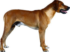 thine dog png