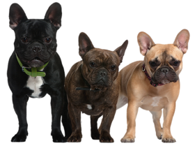 three dogs png pic