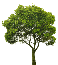 tree png hd green