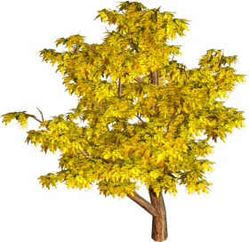tree png yellow