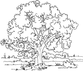 trees png cartoon des arbres