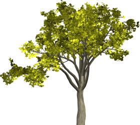 trees png hd arboles
