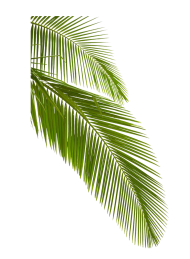 tropical png palm hd