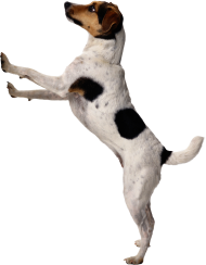 walk up dog png